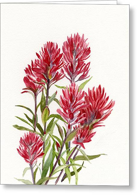 Prairie Style Greeting Cards - Indian Paintbrush Greeting Card by Sharon Freeman