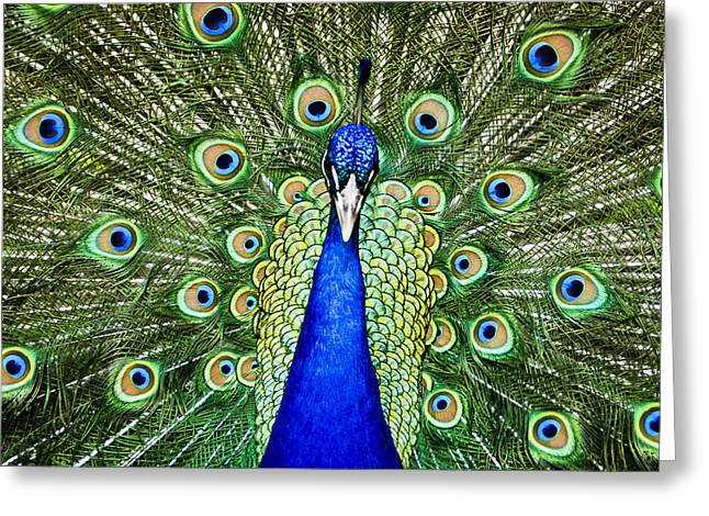 Feather Pyrography Greeting Cards - Indian Peafowl Greeting Card by PointShoot Photography By Mario Gozum