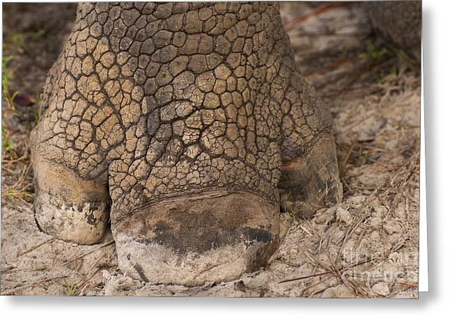 Center Part Greeting Cards - Indian Rhino Foot Greeting Card by Frans Lanting MINT Images