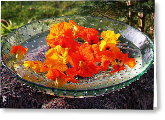Brandenburg Digital Art Greeting Cards - Indian summer in my garden 02 Greeting Card by Li   van Saathoff