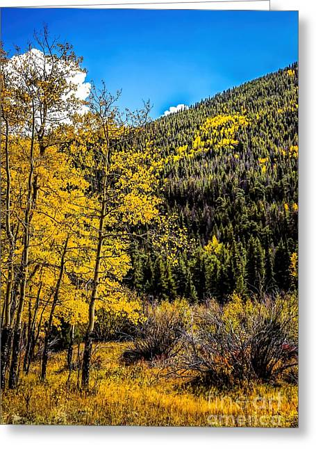 Stagnant Greeting Cards - Indian Summer Greeting Card by Jon Burch Photography