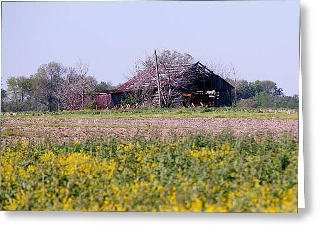 Red Roofed Barn Mixed Media Greeting Cards - Indiana Barn 15 Greeting Card by Nelson Skinner