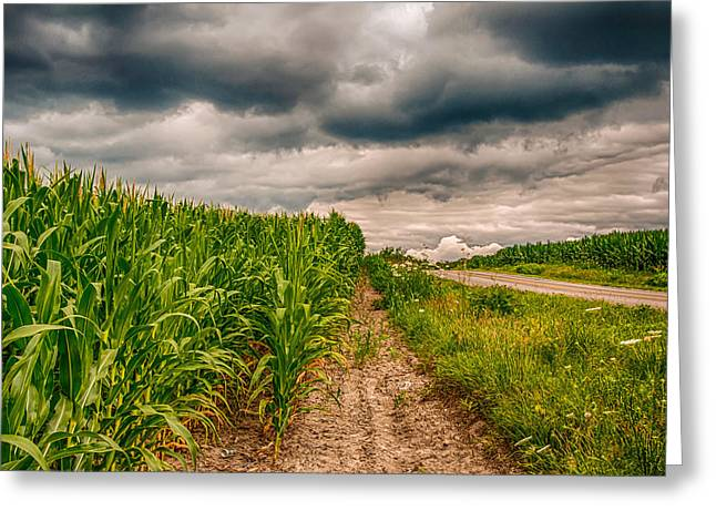Indiana Scenes Greeting Cards - Indiana - Corn Country Greeting Card by Gene Sherrill