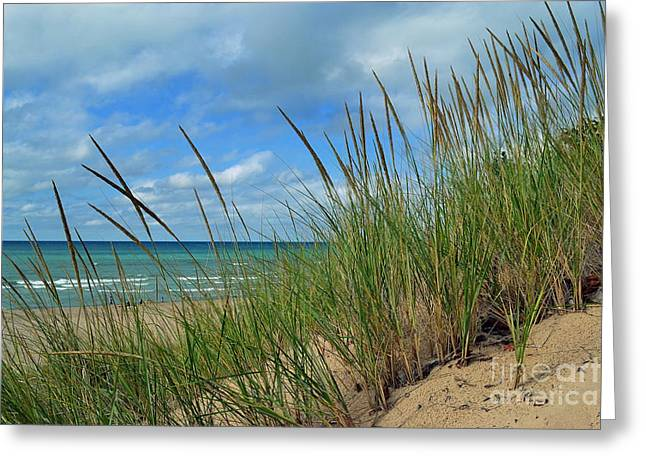 Indiana Dunes Sea Oats Greeting Card by Amy Lucid