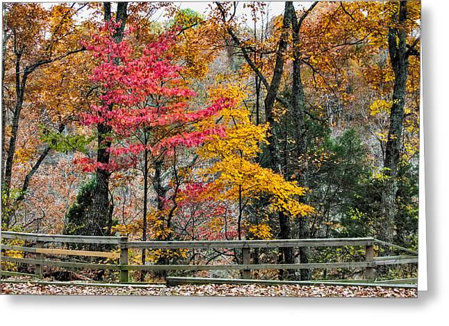 Indiana Autumn Photographs Greeting Cards - Indiana Fall Color Greeting Card by Alan Toepfer
