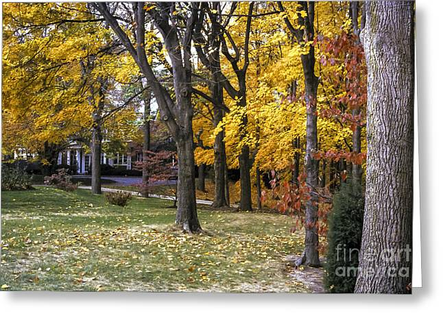 Indiana Autumn Greeting Cards - Indiana University Fall Color Greeting Card by Bob Phillips
