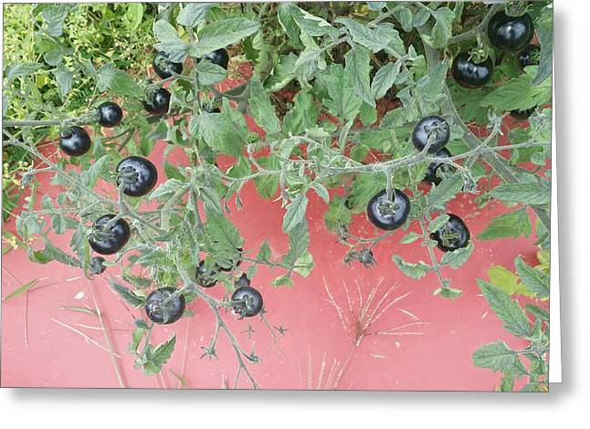 Unprepared Greeting Cards - Indigo Tomato Reflections Greeting Card by Mark Victors