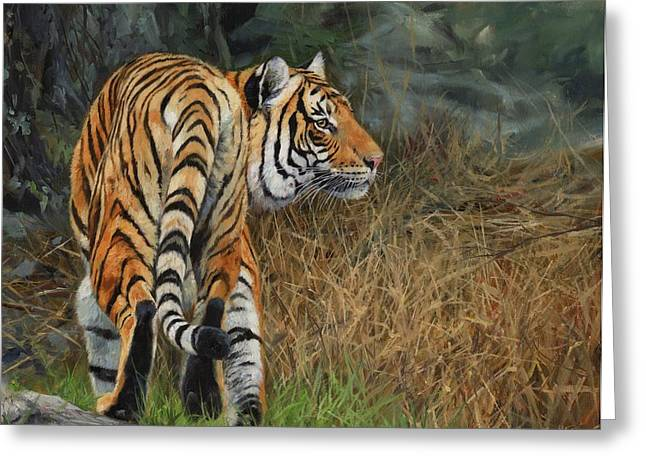 Asian Tiger Greeting Cards - Indo-Chinese Tiger Greeting Card by David Stribbling