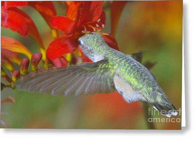 Calliopes Greeting Cards - Indulgence  Greeting Card by Jeff  Swan
