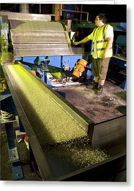 Hot Glue Greeting Cards - Industrial adhesive manufacturing Greeting Card by Science Photo Library