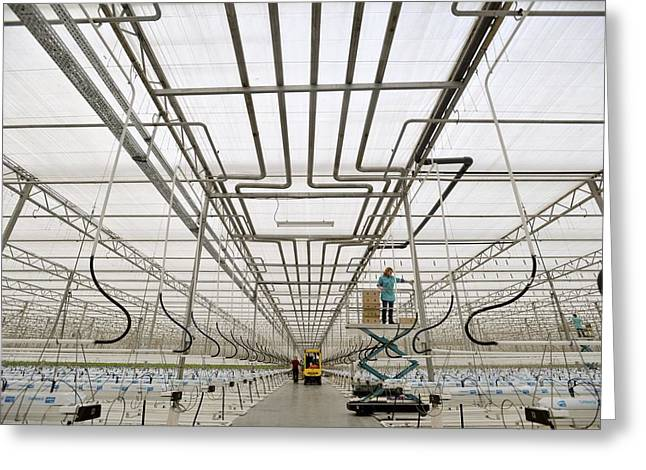Large Scale Greeting Cards - Industrial greenhouse Greeting Card by Science Photo Library