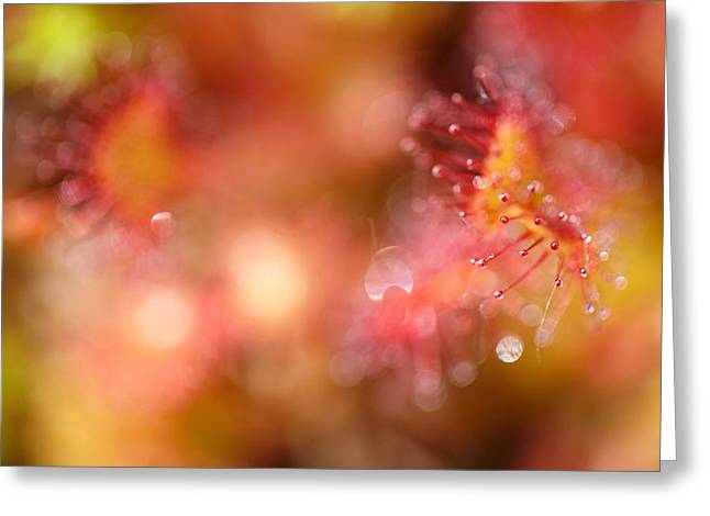 Carnivorous Greeting Cards - Infinity Greeting Card by Roeselien Raimond