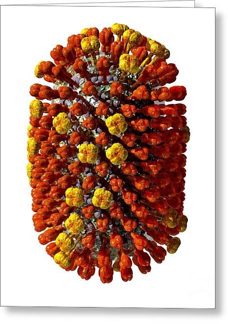 Hemagglutinin Greeting Cards - Influenza Virus, Artwork Greeting Card by Russell Kightley