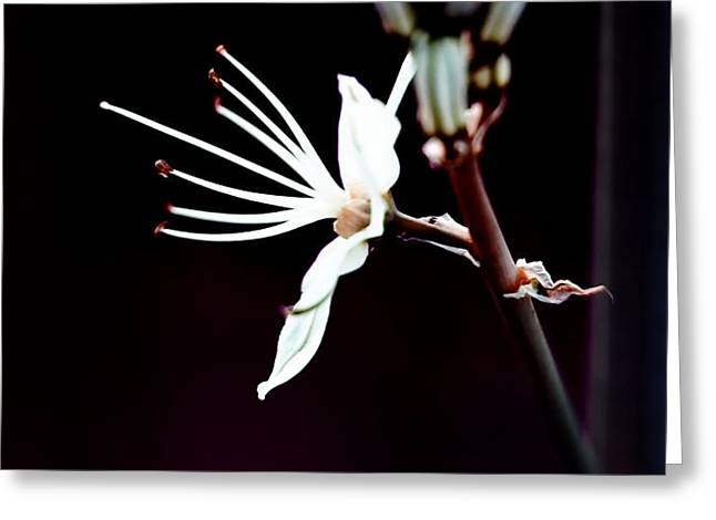 infrared Asphodel Greeting Card by Stylianos Kleanthous