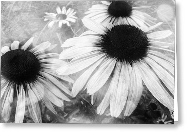 Aster Mixed Media Greeting Cards - Infrared Coneflowers Greeting Card by Shawna  Rowe