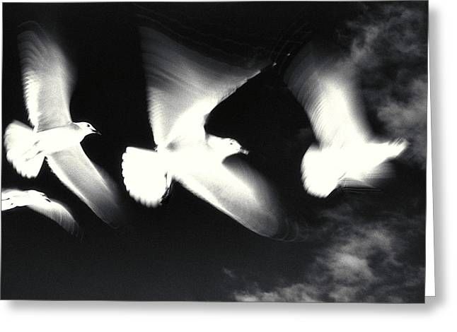 Beach Photographs Greeting Cards - Infrared Gulls Greeting Card by Jerry McElroy