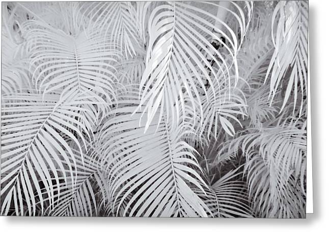 Frond Greeting Cards - Infrared Palm Abstract Greeting Card by Adam Romanowicz