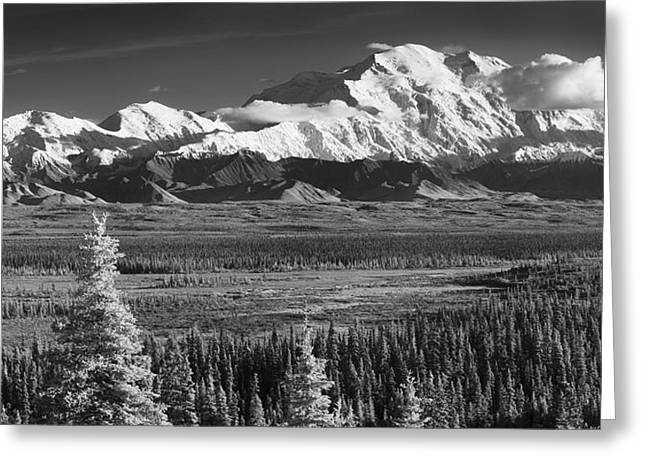 Northside Greeting Cards - Infrared Panorama Of Denali And The Greeting Card by John Delapp