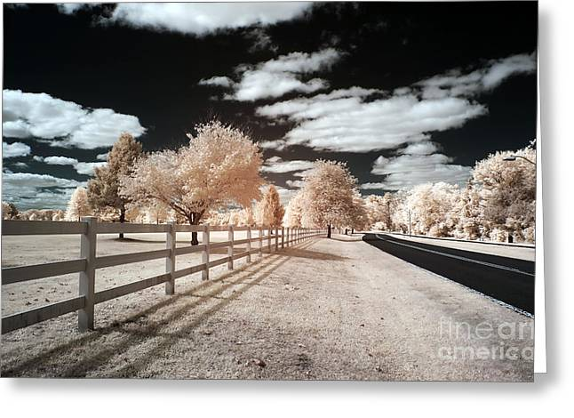 Infrared Photography Greeting Cards - Infrared Park Drive Greeting Card by John Rizzuto