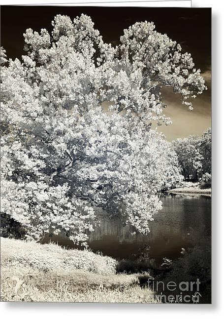 Raritan River Greeting Cards - Infrared River Tree Greeting Card by John Rizzuto