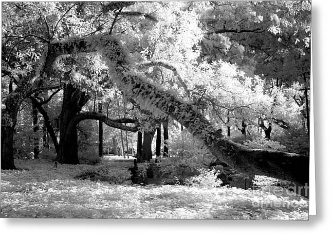 Surreal Fantasy Infrared Fine Art Prints Greeting Cards - Infrared Surreal Gothic South Carolina Trees Landscape Greeting Card by Kathy Fornal