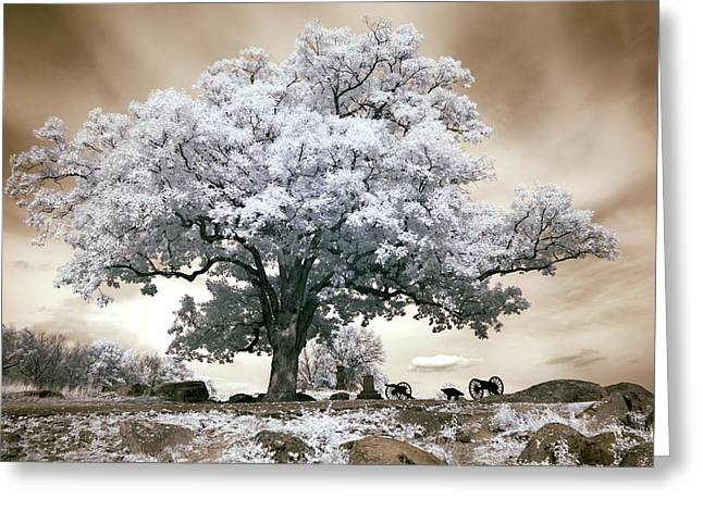 Devils Den Greeting Cards - Infrared tree on a hill in Gettysburg Greeting Card by Paul W Faust -  Impressions of Light