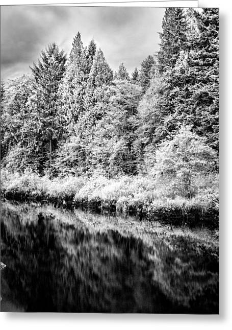 Haist Greeting Cards - Infrared Trees Greeting Card by Paul Haist