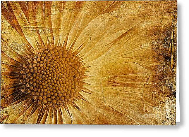 Daisy Digital Greeting Cards - Infusion Greeting Card by John Edwards