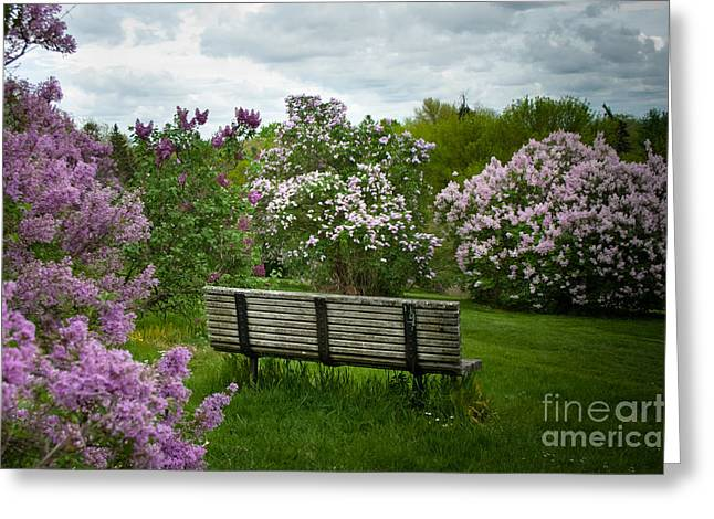 Lilac Greeting Cards - Inhale Greeting Card by Ken Marsh