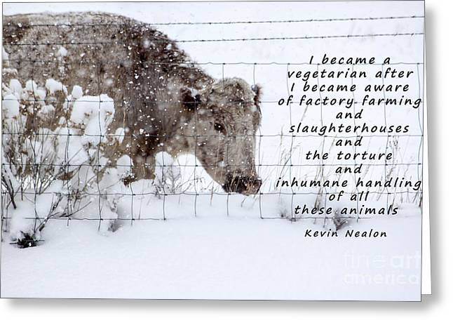 Affirm Photographs Greeting Cards - Inhumane Torture of Animals Greeting Card by Janice Rae Pariza