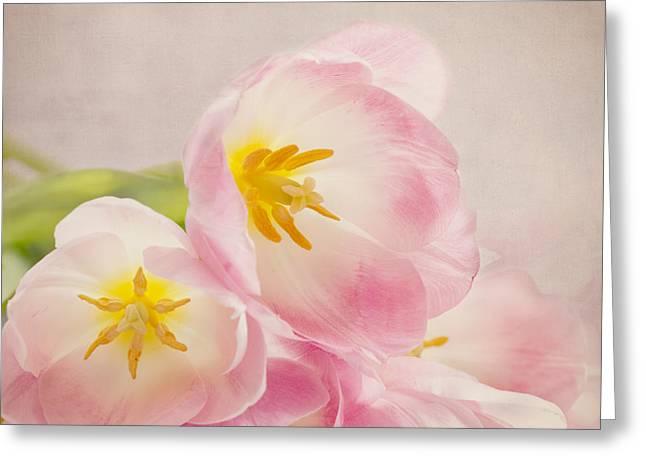 Kim Photographs Greeting Cards - Inner Beauty - Pink Tulips Greeting Card by Kim Hojnacki