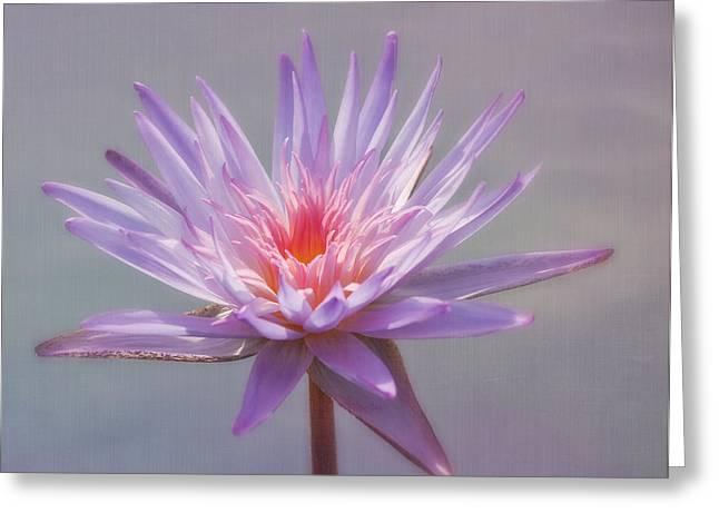 Kim Photographs Greeting Cards - Inner Glow Greeting Card by Kim Hojnacki