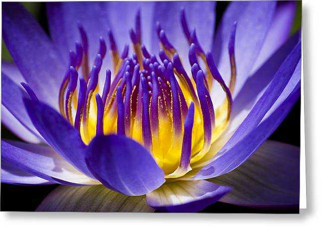 Water Lilly Greeting Cards - Inner Glow Greeting Card by Priya Ghose