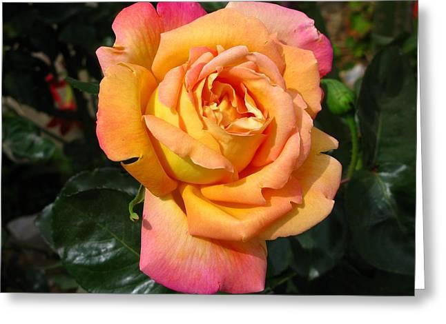 Rose Petals Greeting Cards - Inner Sun Greeting Card by Andonis Katanos