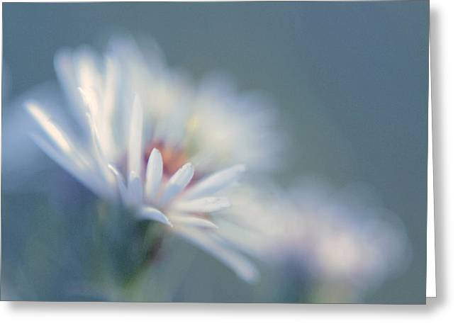 Daisy Greeting Cards - Innocence 03c Greeting Card by Variance Collections