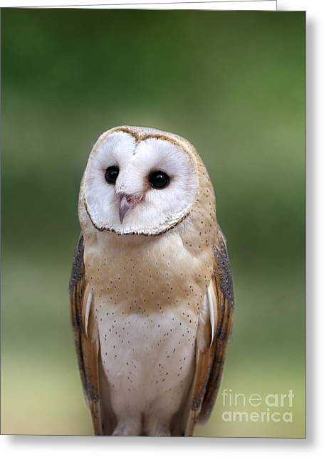Cute Owl Greeting Cards - Innocence Greeting Card by Brandon Alms