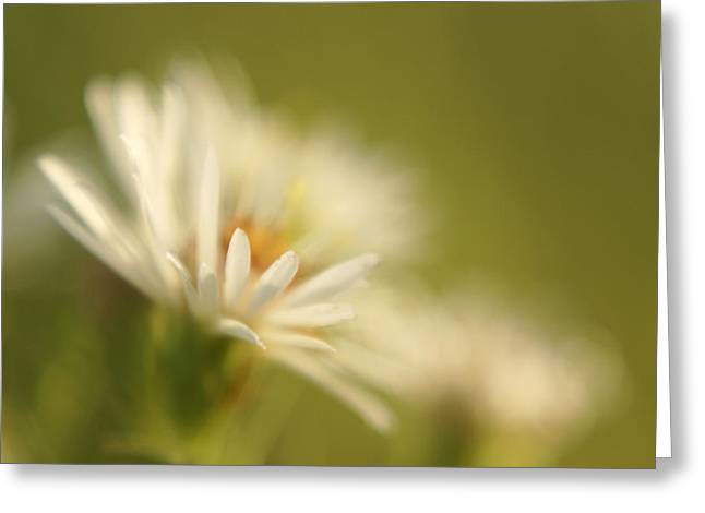 Square Format Greeting Cards - Innocence - Original Greeting Card by Variance Collections