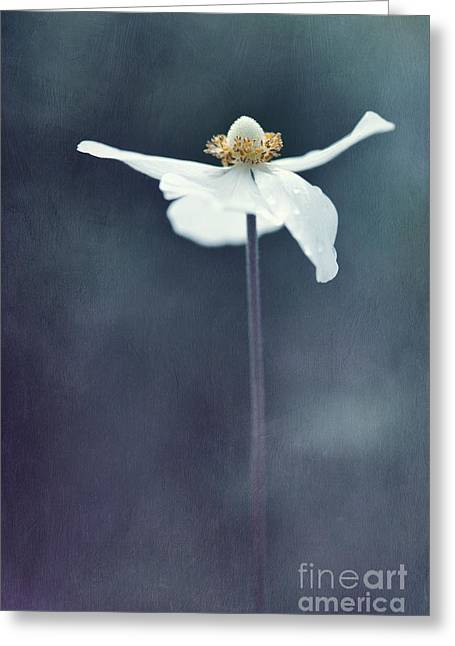 Alone Photographs Greeting Cards - Innocence Greeting Card by Priska Wettstein