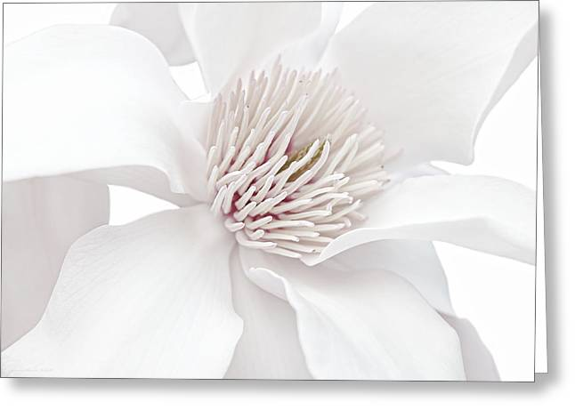 Innocence White Magnolia Flower Greeting Card by Jennie Marie Schell