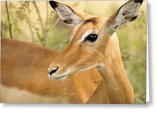 Gazelle Greeting Cards - Innocent Eye Greeting Card by Nian Chen