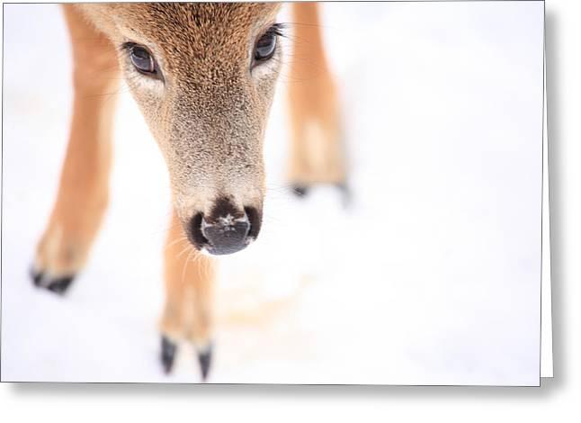 Deer In Snow Greeting Cards - Innocent Eyes Greeting Card by Karol  Livote