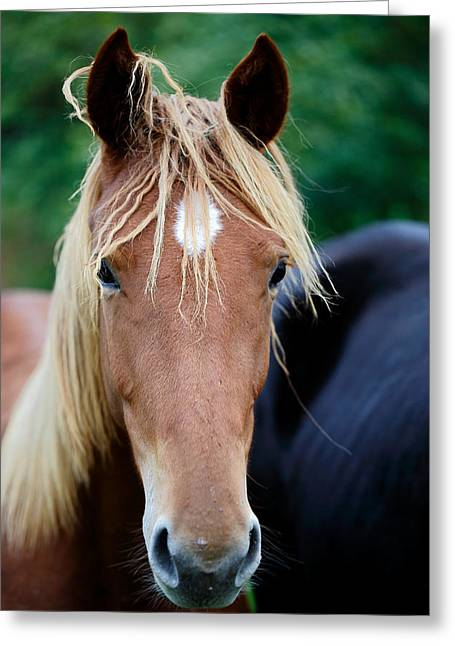 Innocent Look Greeting Card by Mah FineArt