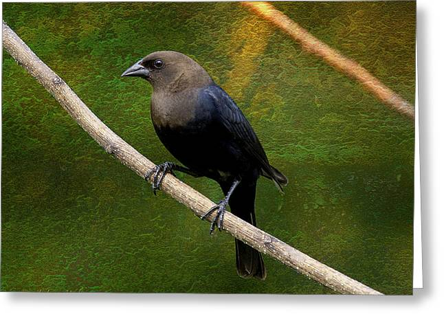 Inquisitive Cowbird Greeting Card by J Larry Walker