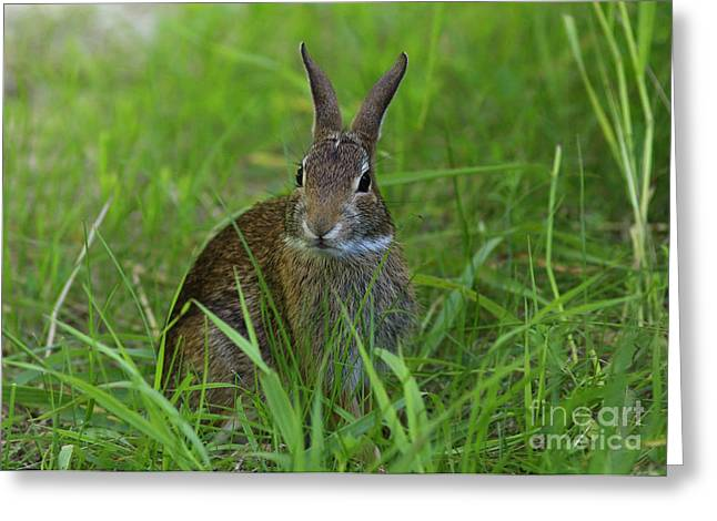 Inquisitive Rabbit Watching You Greeting Card by Inspired Nature Photography Fine Art Photography