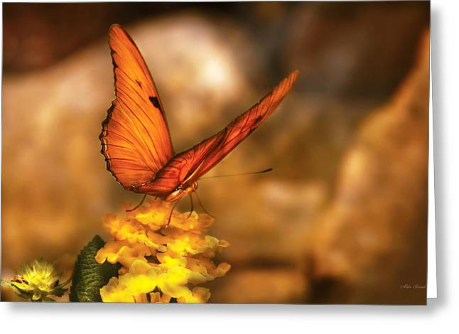 Insects Greeting Cards - Insect - Butterfly - Just a bit of orange  Greeting Card by Mike Savad