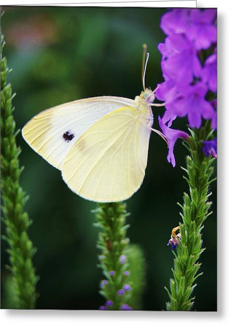 Abstract Rain Greeting Cards - Insect Moth Pale Yellow Greeting Card by Carol Toepke