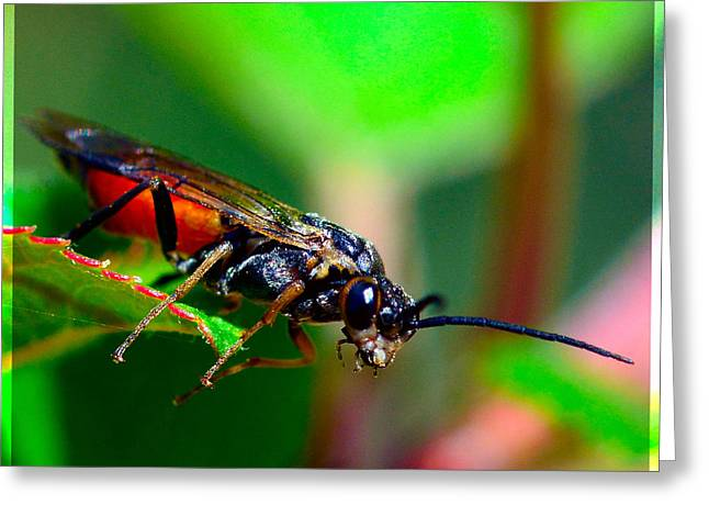 Insect Greeting Card by Toppart Sweden