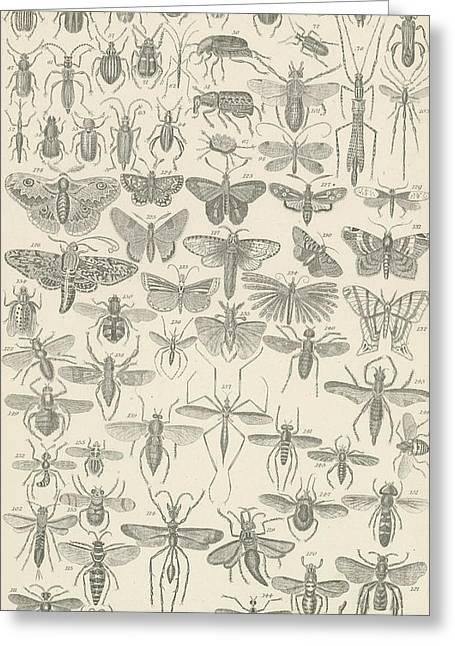 Butterflies Drawings Greeting Cards - Insects Greeting Card by English School