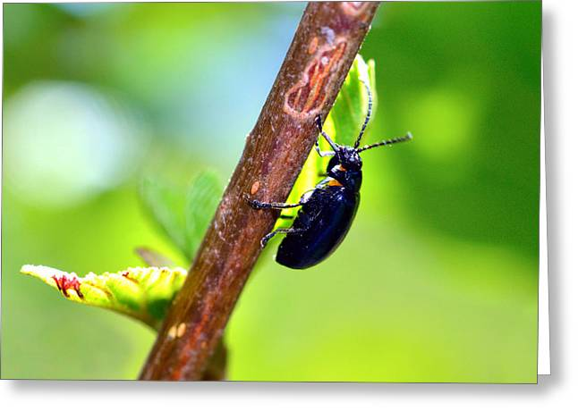 Green Hornets Greeting Cards - Insects in nature on a stick Greeting Card by Toppart Sweden
