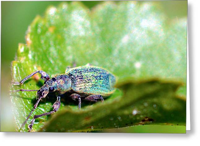 Green Hornets Greeting Cards - Insects in nature on leaf Greeting Card by Toppart Sweden